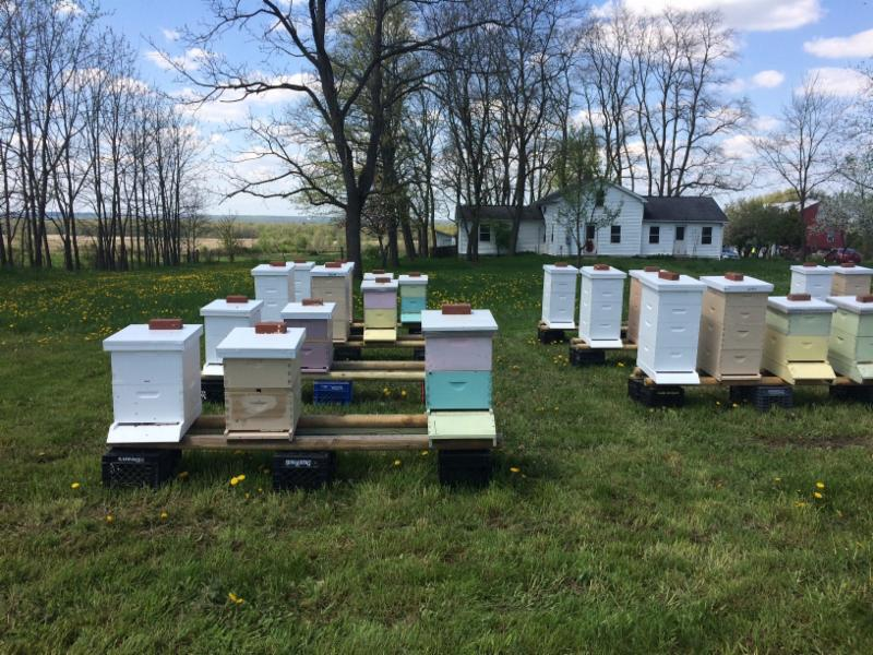 405,000 Bees and a new Greenhouse – Just Another Day At St. Herman's