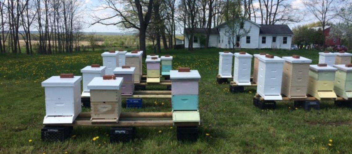Hives at farm